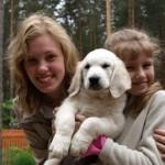 Golden retriever puppies from Moondust Masterpiece and Panda Astra litter TULIP STORY BASTETA