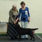Basteta's retrievers triumph at the dog show